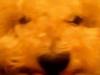 Besties Dog Lol